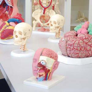 laboratorio-anatomia3